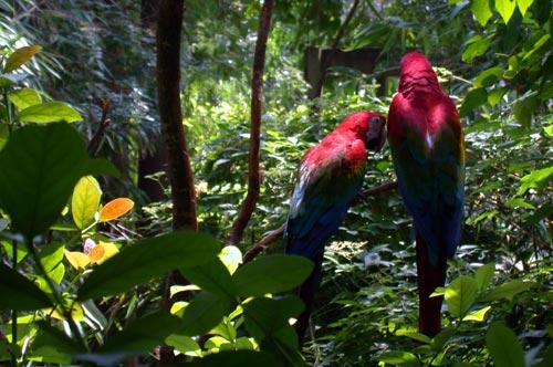 Two parrots having a debate, Audubon Park Zoo, New Orleans, August 2004