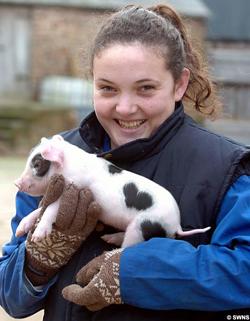 Valentine Pig!